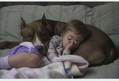 "Pitbulls used to be known as ""nanny dogs"" for their temperament (they score above a golden retriever in temperament!). Pits are NOT naturally vicious animals and they DONOT have lock jaws. Learn your facts before you judge. It's how you raise them. ANY type of dog that you abuse, taser, beat and never show love towards will become vicious over time. Punish the owners and have stricter laws about who can own them. don't punish an innocent dog!"