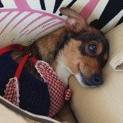 Adozione cuccioli - Sissy 5 Kili Di Dolcezza
