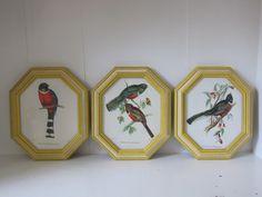 Vintage Trio of Birds Framed Prints Pictures by SmythandMelville, $45.00