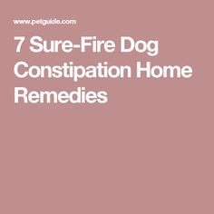 Constipation Small Dogs Home Remedy
