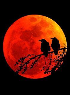"deepsoulfury: "" Art Photography-Birds on red moon "" - Anna Liebergesell - - Roter mond - Fotografie Ciel Nocturne, Shoot The Moon, Moon Pictures, Crows Ravens, Moon Photography, Red Moon, Orange Moon, Beautiful Moon, Blood Moon"