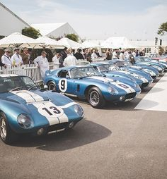 Goodwood - Gallery: Shelby Daytona Coupes unite on track Ford Shelby Cobra, Shelby Car, Ac Cobra, Sports Car Racing, Sport Cars, Road Racing, Auto Racing, Classic Sports Cars, Classic Cars