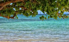 #background #blue #costs #environment #green #island #leaf #light #nature #summer #tree #water
