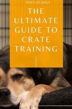 Crate training your puppy? Crate training your adult dog? It doesn't matter the age, use the Ultimate Guide To Crate Training to teach your do to love their crate! Grab your dog, grab your guide and let's start crate training! Training Your Puppy, Dog Training Tips, Training Schedule, Training Classes, Potty Training, Cute Funny Animals, Cute Baby Animals, Puppy Crate, Up Dog