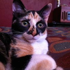 100% Done. | 8 Cats That Are Prettier Than Most Humans