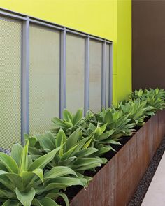 Richardson Apartments by Andrea Cochran Landscape Architecture , via Behance