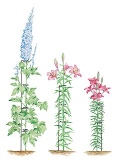 Stem Ladder Plant & Flower Supports   Buy from Gardener's Supply. Up to 5 feet tall, wonderful for lilies.