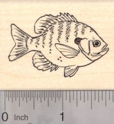 Bluegill Rubber Stamp Freshwater Fish AKA Bream Brim Copper Nose * More info could be found at the image url.