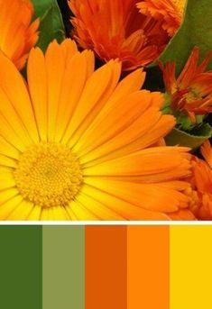Ideas For Wedding Fall Ideas Autumn Color Schemes Scheme Color, Color Schemes Colour Palettes, Fall Color Palette, Colour Pallette, Color Palate, Color Combos, Fall Color Schemes, Colors Of Autumn, Colors Of The World