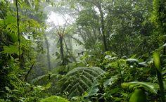 equateur-biodiversite