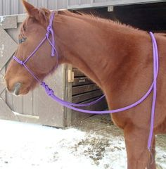 Natural hackamore / loping hackamore.   Halter with 16 foot line.  Makes 7' split reins or tie one end for a training line.