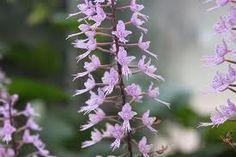 winter flowering plants - Google Search