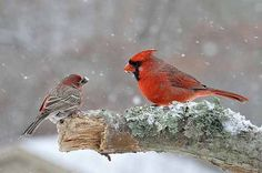 Learn how birds in winter are battling and surviving in extreme conditions, and find out what you can do to help.