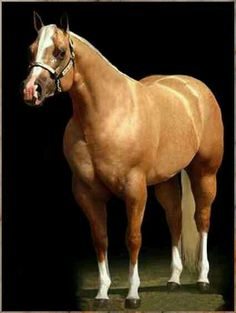 I Am A Hot Topic - palomino quarter horse stallion Quarter Horses, American Quarter Horse, Beautiful Horse Pictures, Most Beautiful Animals, Beautiful Horses, Palomino, Types Of Horses, All About Horses, All The Pretty Horses