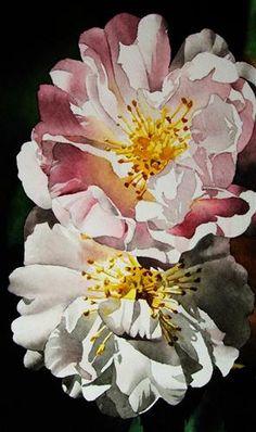 Pink & White Roses, painting by artist Jacqueline Gnott Art Floral, Rose Art, Watercolor Rose, Botanical Art, Flower Art, Illustration, White Roses, Pink White, Drawing