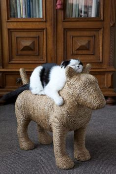 Cat scratching post. The cat looks like it's waiting to take off! (ck. out his squinched eyes and ears ; )