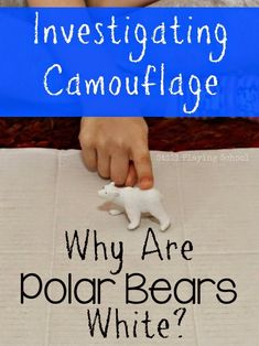 Are Polar Bears White? A Preschool Investigation Why Are Polar Bears White? A Preschool Investigation on Camouflage by Still Playing SchoolWhy Are Polar Bears White? A Preschool Investigation on Camouflage by Still Playing School Kindergarten Science, Preschool Lessons, Preschool Activities, Winter Activities, Science Lessons, Primary Science, Science Resources, Science Ideas, Elementary Science