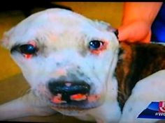 Candle Light Vigil for Puppy Doe PLEASE SHARE FOR PUPPY DOE