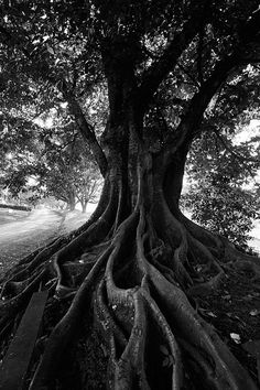A wonderful picture to illustrate faith formation...the bigger, the deeper, the stronger the roots, the more foliage and fruit the tree will bear.