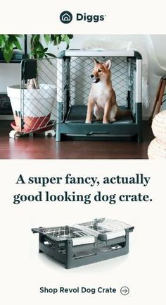 You don't have to choose...the Revol dog crate has it all. It will look great in your home, but is also modern and collapsible, so you can easily take it on the road with you. That's right, only the best for your pup!