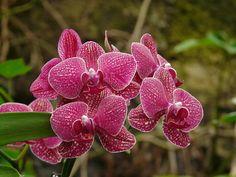 Cómo regar las orquídeas   Cuidar de tus plantas es facilisimo.com