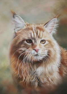Maine Coon,Pastel by J Thams@ ArtWanted.com