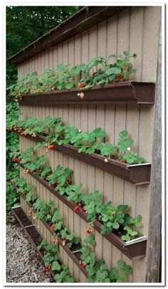 Vegetable Garden Design, Vegetable Gardening, Gardening Tips, Organic Gardening, Raised Vegetable Garden Beds, Raised Bed Gardens, Small Garden Raised Beds, Fine Gardening, Gardening Quotes