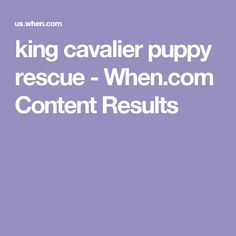 king cavalier puppy rescue - When.com Content Results