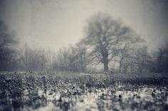 Dark Tree - Photo by Maic