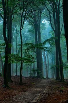 Waldweg mit blauem Nebel