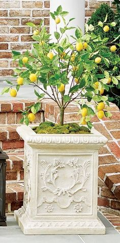 "A cheerful accent for a porch or patio, the 50"" Outdoor Lemon Potted Tree realistically mimics a lemon tree's varying shades of oblong leaves and vibrant yellow fruit. This lifelike accent, which stands more than 4 feet tall, is handcrafted and UV treated to prevent fading."