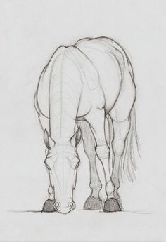 Animal drawing ideas free easy animal sketch drawing information ideas sketches drawings horse sketch animal sketches Easy Animal Drawings, Horse Drawings, Cool Drawings, Animal Sketches Easy, Easy Doodles Drawings, Pencil Sketches Easy, Hipster Drawings, Pencil Drawings Of Animals, Arte Equina