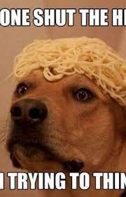 Funny Dog Memes Clean Funny Dog Memes 2019 Dog Meme Face Cute Dog