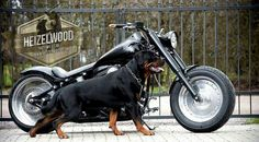 Two of the best things in life, a Rottweiler and a motorcycle!