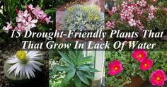 """All plants require water to survive, but some plants """"drink"""" less water than others. Certainly, there…"""