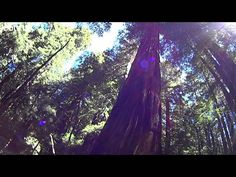 San Francisco is rich in spectacles - take a virtual tour right now! (picture: 0184 Muir Woods00 Main Trail)