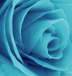 Cyan Rose by =ih8m0r0nz at deviantart.net