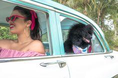 Fotografias Retro, Vintage. Puerto Rico, Dogs, Event Photography, Pet Photography, Retro Photography, San Juan, Fotografia, Pet Dogs, Doggies