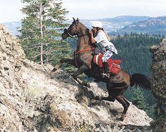 Endurance.  Arabians are so elegant and so sturdy!