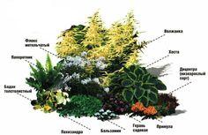 Front Garden Landscape, Park Landscape, Landscape Plans, Flower Garden Plans, Love Garden, Dream Garden, Terrarium Plants, Garden Plants, Outdoor Plants