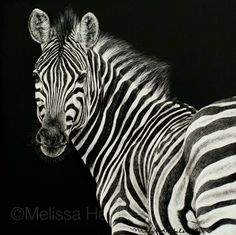 The wildlife + wild place artwork by Central WI based artist, Melissa Helene. Artwork by request and commission. Pencil Drawings Of Animals, Drawing Animals, Scratchboard Art, Zebra Art, Scratch Art, Black And White Artwork, Zentangle Patterns, Animals Images, Pet Birds