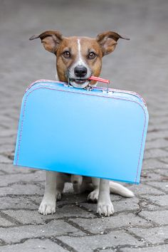 Flying with a Dog: Tips to Keep Your Dog Safe While Flying the Friendly Skies #dog #pets #travels