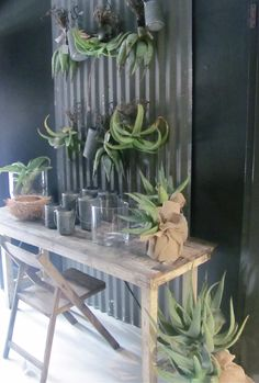 easy green idea for indoors