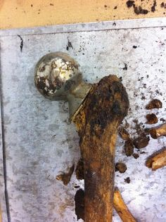 Forensic anthropology and identification - hip prosthesis (via Odyssey Fieldschools @OdysseyForensic pic.twitter.com/agAP4U6eTw)