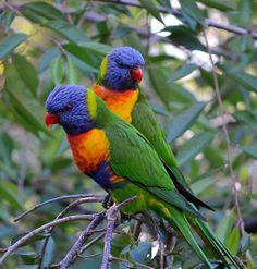 Tropical Birds, Exotic Birds, Colorful Birds, Pretty Birds, Beautiful Birds, Animals Beautiful, Nature Animals, Animals And Pets, Bird Applique