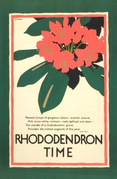 Rhododendron Time -  by Frank Newbould