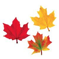 Maple Leaves Pack
