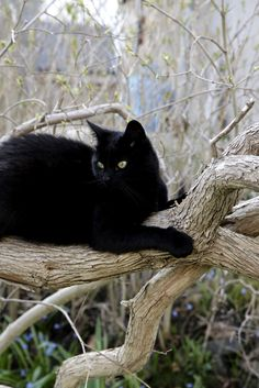 What a beautiful black cat. I love black cats. They are so beautiful. Thewitchescircle