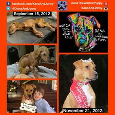 Check out this sweet dog's story. This first pic is heartbreaking!    I am so glad she found a loving home.