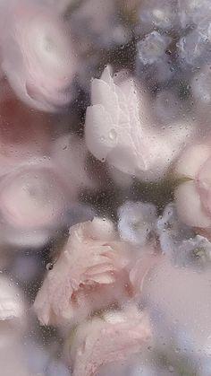 fleurs (ctto)
